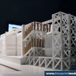 Stage Structure Model