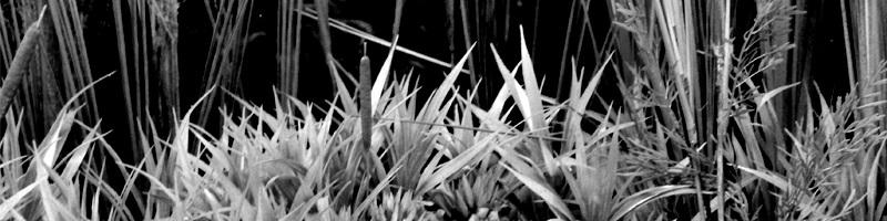 Wetland Habitat Diorama HEADER